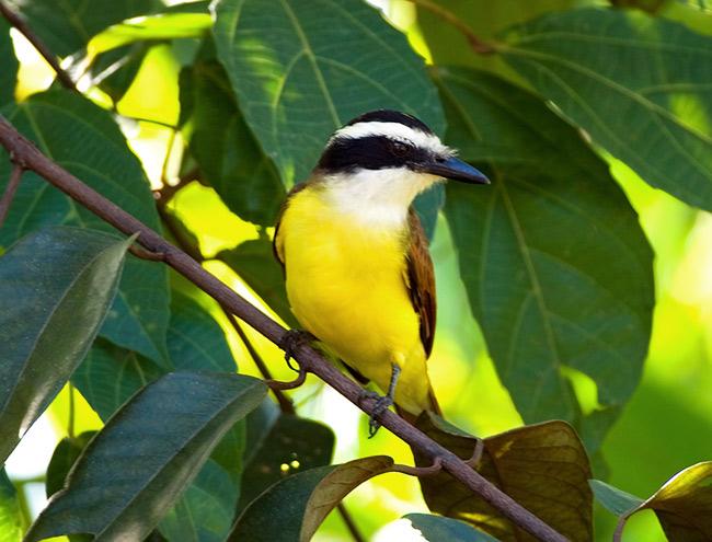 http://andreev.org/albums/South_of_Belize/images/176BZ.jpg
